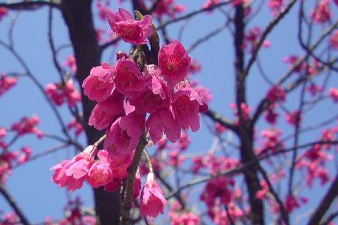 2008-03-15-01.JPG