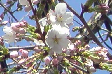 2008-03-22-05.jpg