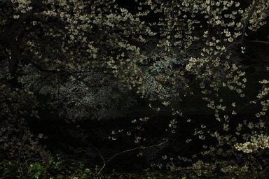 2009-04-03-02.JPG