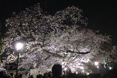 2009-04-03-03.JPG