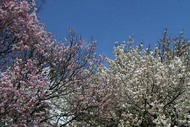 2010-04-10-04.jpg