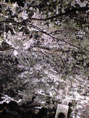 2009-04-03-04.JPG