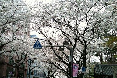 2010-04-03-05.jpg
